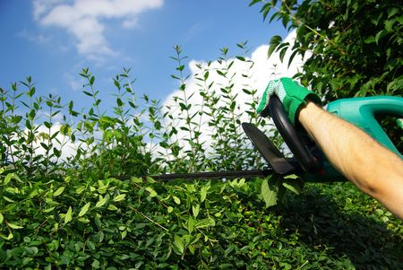 hedge clipping