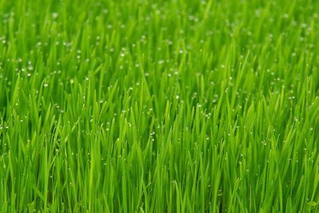 grass Stock Photo - 2722117