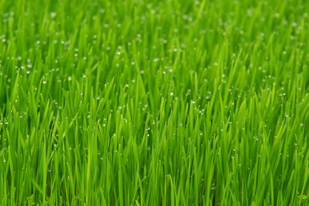 grass Stock Photo - 2722117