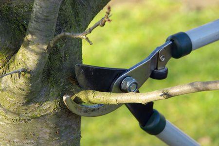 boom kappen: boom snijden  Stockfoto