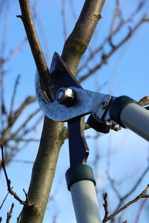 boom kappen: boom snijden
