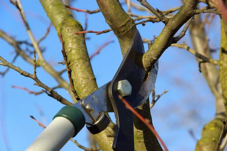 bole: tree cutting Stock Photo