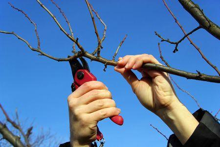 boom kappen: Tree snijden, tuinieren
