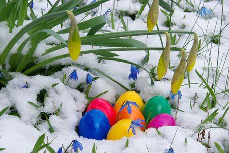 Paashaas eieren in de sneeuw, met narcis Stockfoto - 2764974