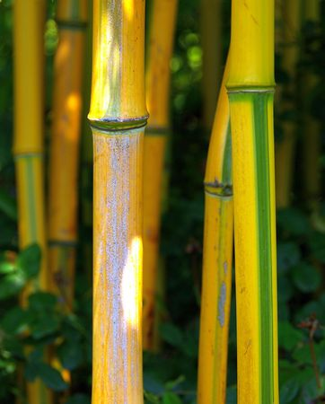 bamboo Stock Photo - 2837533