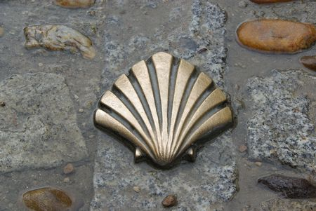 St James shell  photo