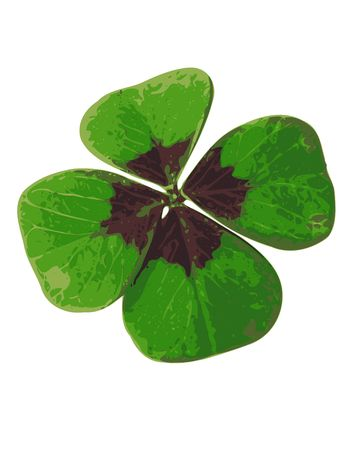 four leafed clover Stock Photo - 3196169