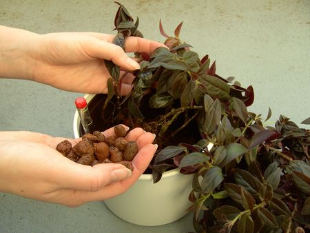 expanded:  repot hydroponic 03 Stock Photo