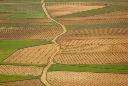 Spain field photo