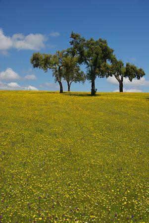 meadow 26 photo