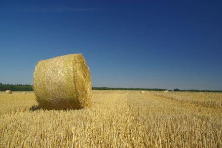 bale of straw Stock Photo - 3396215
