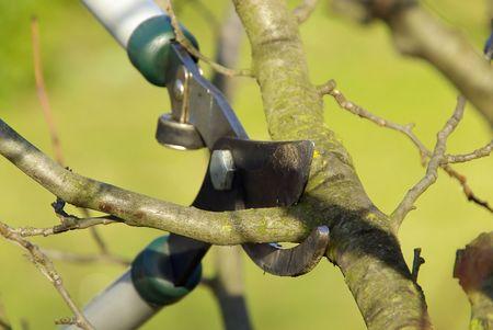 boom kappen: boom snijden 15