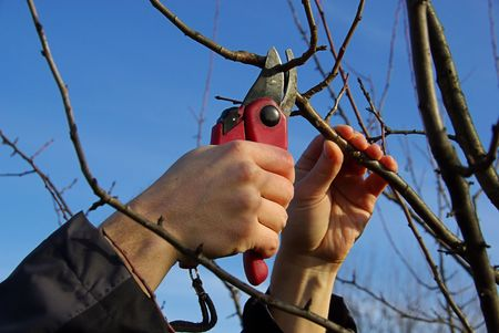 boom kappen: boom snijden 16