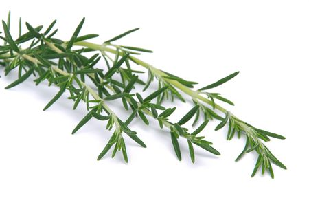 Rosemary 02 Stock Photo - 3429924