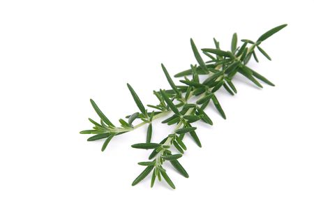 pungent: 08 Rosemary