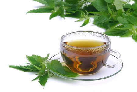 tea nettle 01 photo