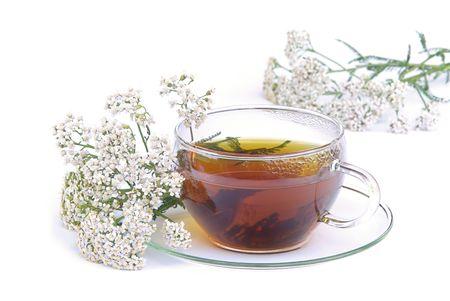 yarrow: tea yarrow 02