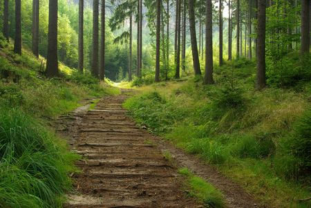 forest path: forest  Stock Photo