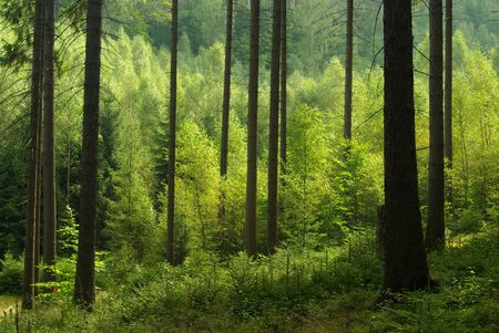 landschaft: forest  Stock Photo