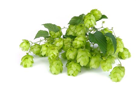 ferment: hop Stock Photo