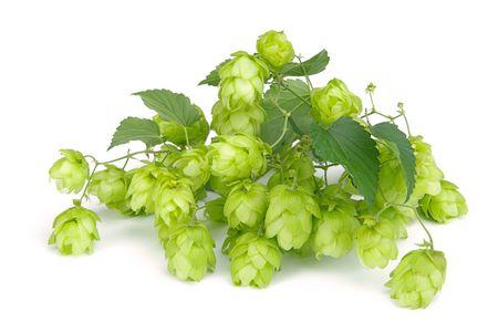 hop hops: hop 06