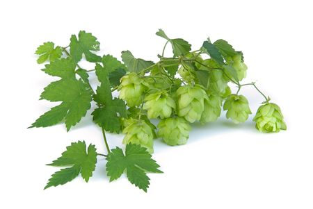 hop 10 Stock Photo - 3569889