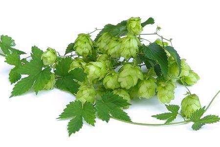 ferment: hop