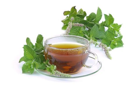 mentha: tea Mentha citrata