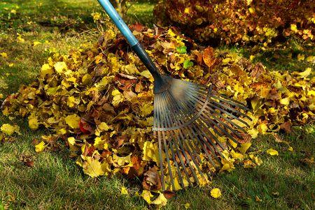 leaves rake 02 Stock Photo - 3625139