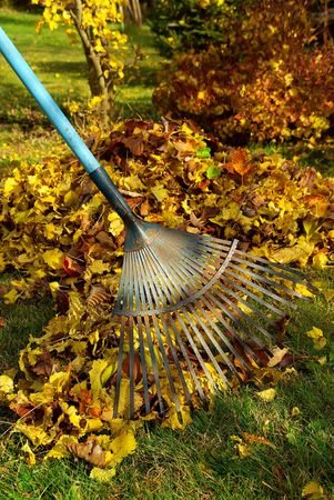 leaves rake 03 Stock Photo - 3625138