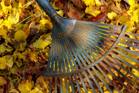 leaves rake 04 Stock Photo - 3625135