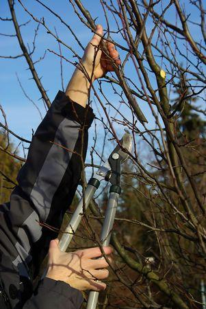 boom kappen: boom snijden 17