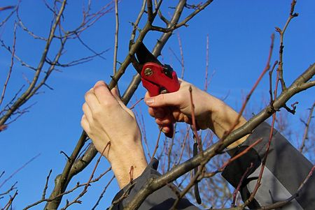 boom kappen: Baum verschneiden - tree snijden 20