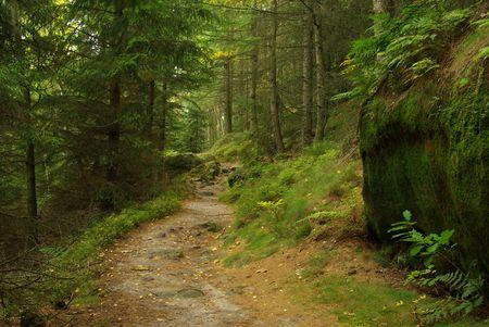 hiking track Hirschgrundweg 09 photo