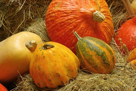 ornamental pumkin Stock Photo - 3769883