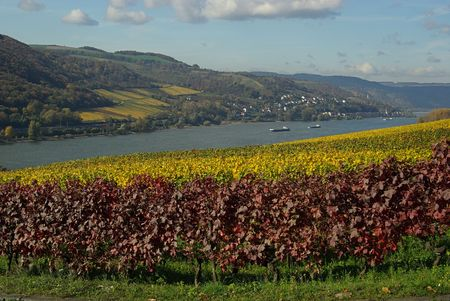 rudesheim: Rhein
