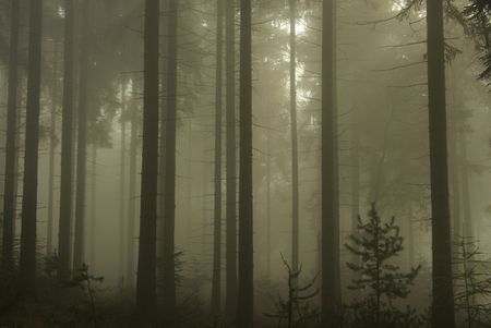 forest in fog  Stock Photo - 3934812