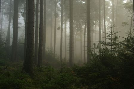 forest in fog 14 photo