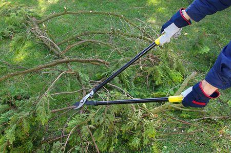boom kappen: boom snijden 24 Stockfoto