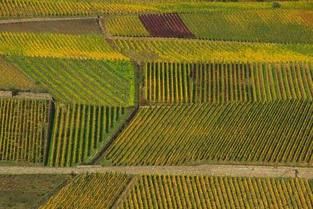 rheintal: vineyard