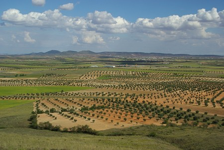 olive grove 09 Stock Photo - 4052591