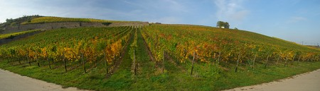rudesheim: Ruedesheim vineyard 01 Stock Photo