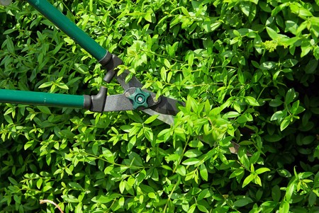 cut a hedge Stock Photo - 4290376