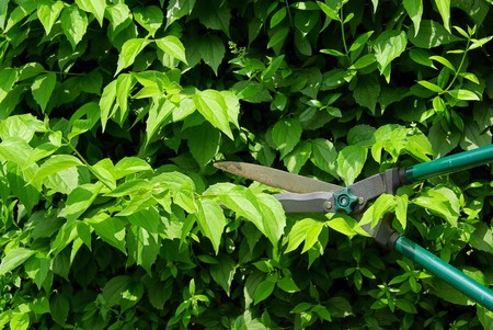 cut a hedge 06 Stock Photo - 4214749