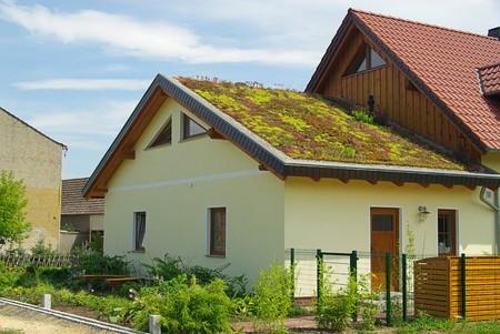 blau: green roof