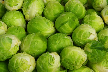 brussel: Brussels sprout 03