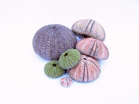 sea urchin 01 Stock Photo - 4365708