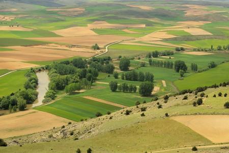 Gormaz field  photo