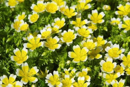 poached: poached egg plant 01