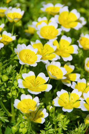 poached: poached egg plant 04 Stock Photo